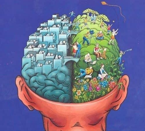 Мозг работает без остановки