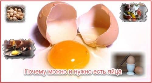 Почему можно и нужно есть яйца